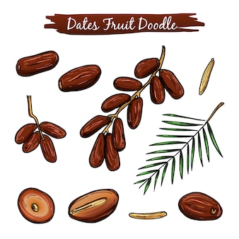 Dates fruit vector illustration collection.