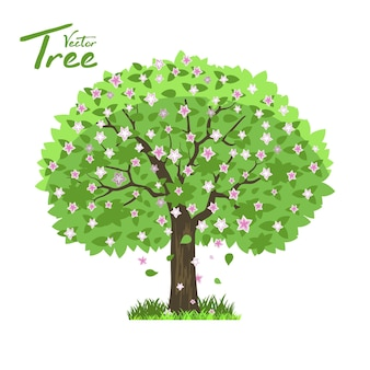 Листопадное дерево в четыре сезона - весна, лето, осень, зима.