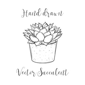 植木鉢の装飾植物多肉植物ポリフィラ。手描きのベクトル図です。サボテンアロエ