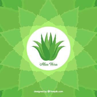 Decorative background with aloe vera plant