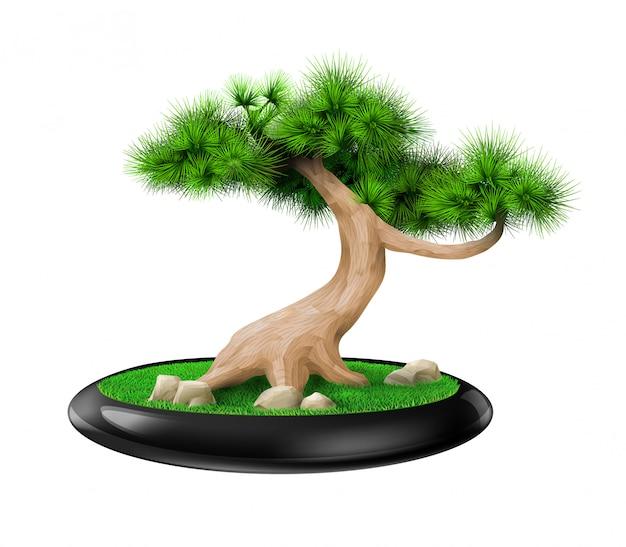 Декоративное дерево бонсай сосна в горшке