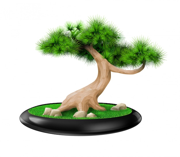 Decorative bonsai tree pine in pot