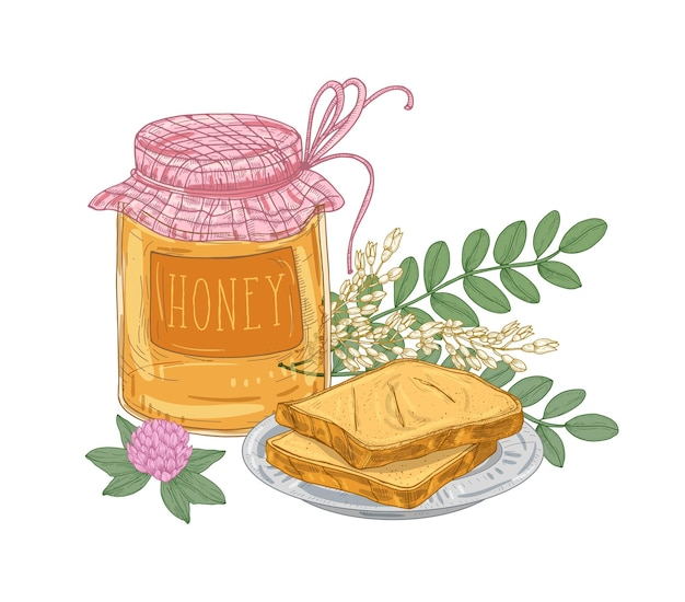 Decorative composition with jar of sweet honey, pair of toasts lying on plate, acacia branch and clover flower isolated on white