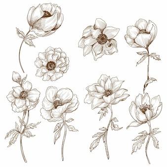 장식 꽃 스케치 세트 디자인