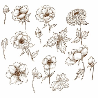 Decorative floral sketch set design
