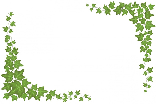 Decorative green ivy wall climbing plant vector frame background