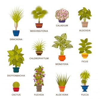 냄비에 장식 관엽 식물 설정합니다. 플로리스트 실내 야자수와 실내 화분. 삽화