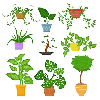 Decorative houseplants in pots set isolated on white background. decorative indoor plants. green plant for home illustration