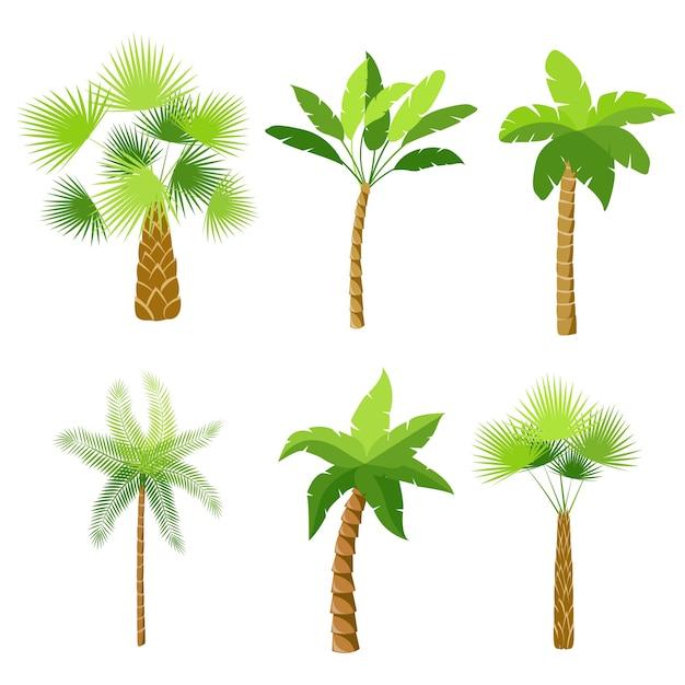 palm tree vectors photos and psd files free download rh freepik com palm tree vector silhouette palm tree vector silhouette