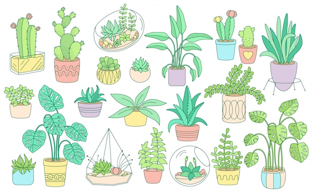 Decorative plant, potted ceramic big line set. color linear flat cartoon house indoor flower. succulents house plants, cactus collection, monstera, aloe flowerpot. isolated illustration