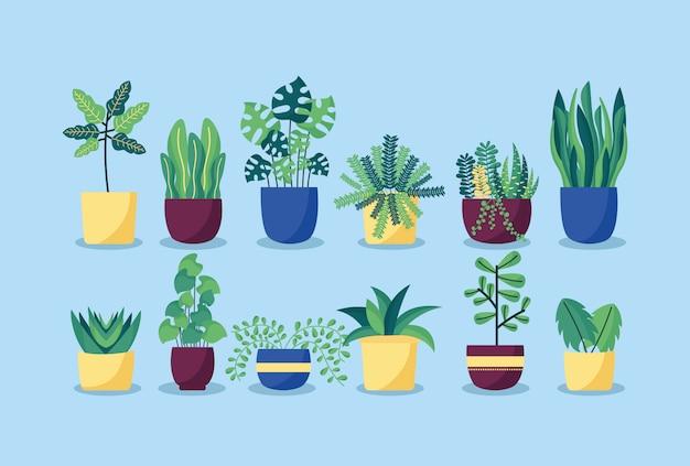 Inspirasi Tanaman untuk Taman Rumah Anda
