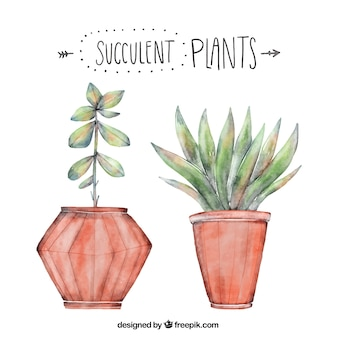 Decorative plants in watercolor style