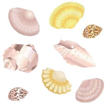 Decorative seashell set