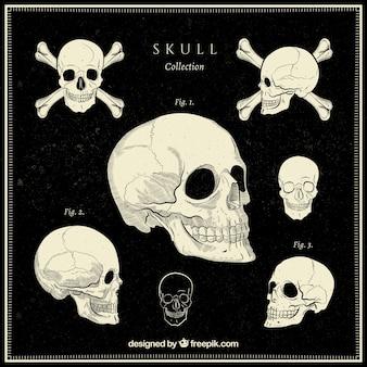 빈티지 스타일의 장식 두개골