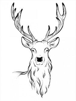 Deer antles