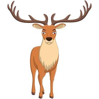 A deer cartoon isolated