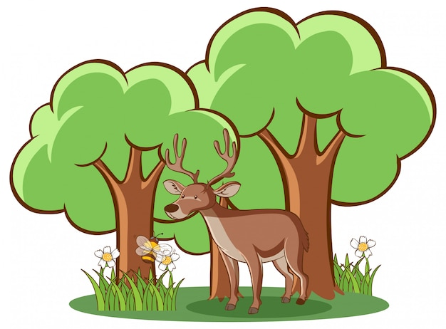 Deer in forest on white background
