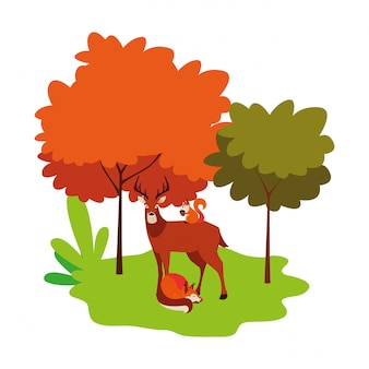 Deer fox and squirrel animals on the nature
