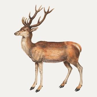 ビンテージスタイルの鹿