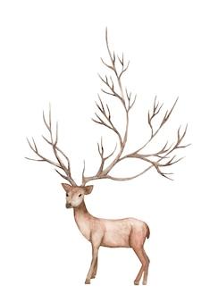 鹿、山の木の枝。水彩イラスト