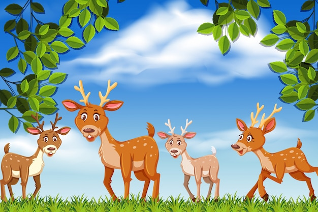 Deer in nature scene