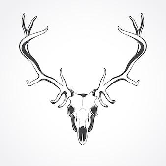 白い背景の上の鹿の頭蓋骨