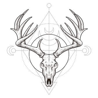 Deer skull vintage hand drawn illustration