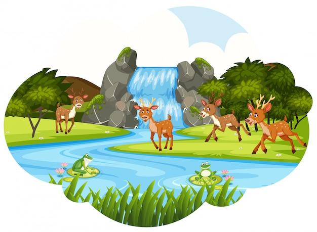 Deer at the waterfall