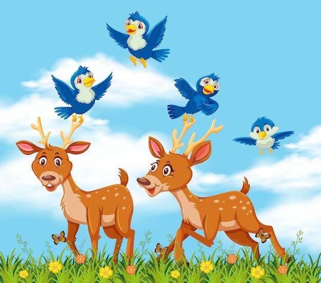 Deers and bird in nature