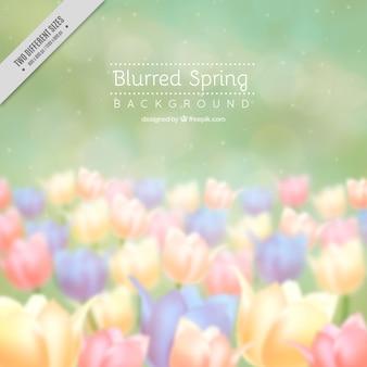 Defocused background of tulips
