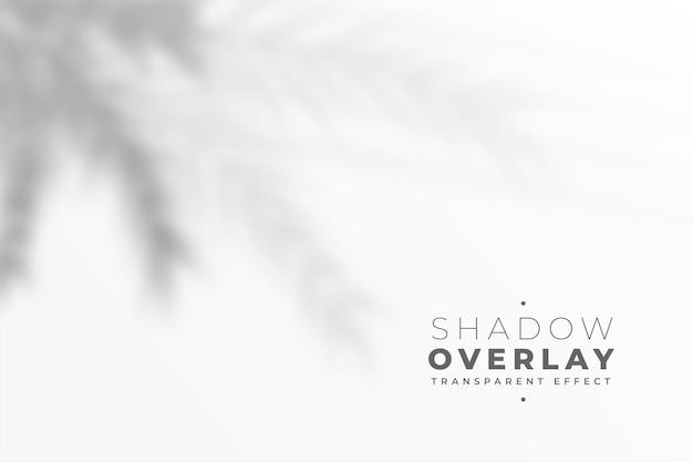 Sfocato foglie blu ombra su sfondo bianco effetto muro