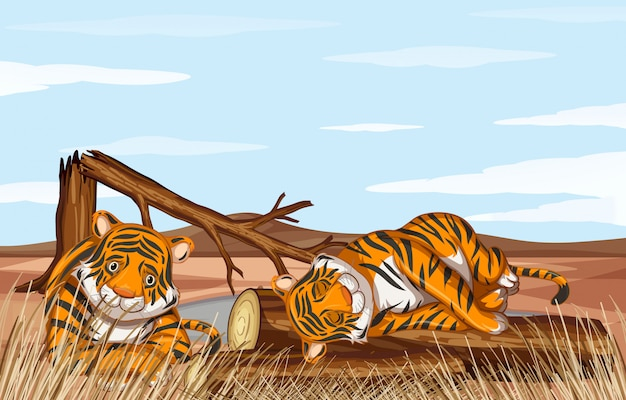 Deforestation scene with weak tigers