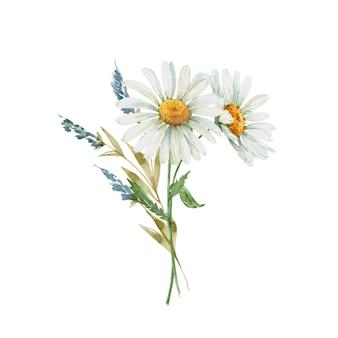 白いカモミールの花の水彩イラスト、手描きの繊細な花束
