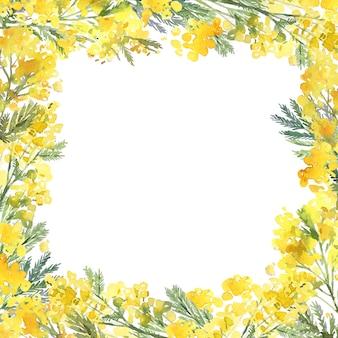 手描きのミモザの花で作られた繊細な春の花のフレーム。シルバーアカシアの花と水彩植物フレーム。