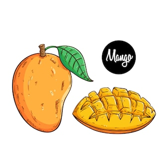 Delicious fresh mango fruit with colored sketch or hand drawn style