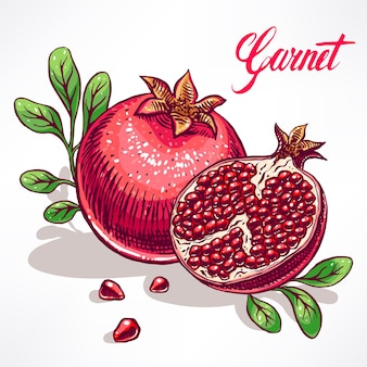Delicious ripe pomegranate with green leaves. hand-drawn illustration