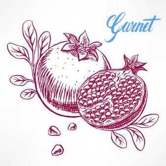 Delicious ripe sketch pomegranate. hand-drawn illustration