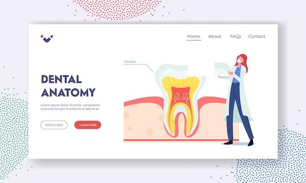 Шаблон целевой страницы стоматологической анатомии. крошечный дантист женщина-врач персонаж в халате положил часть эмали на огромный зуб в поперечном сечении инфографики. здоровая структура зубов. векторные иллюстрации шаржа
