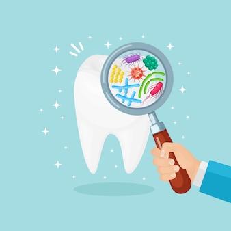 돋보기와 치과 의사가 치아를 검사합니다. 박테리아, 감염으로 치아. 구강 위생 개념