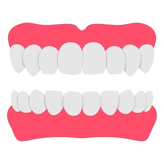 Denture teeth cartoon illustration isolated on a white background.