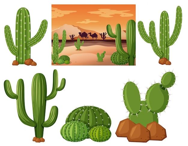 Desert field with cactus plants