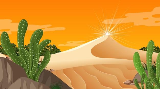 많은 선인장과 일몰 시간 장면에서 사막 숲 풍경