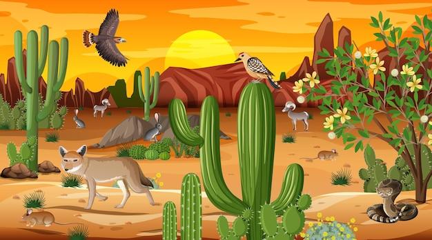 야생 동물과 함께 일몰 시간 현장에서 사막 숲 풍경