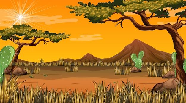 日没時の砂漠の森の風景
