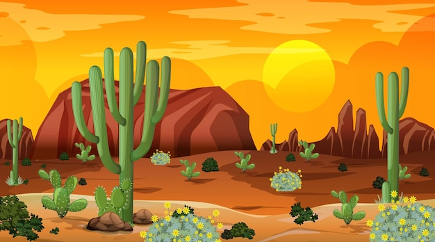 Desert forest landscape at sunset time scene with many cactuses