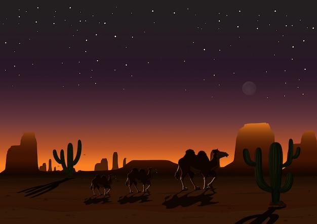 A desert landscape at night