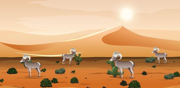 낮 시간 현장에서 모래 산과 큰 뿔양 풍경 사막
