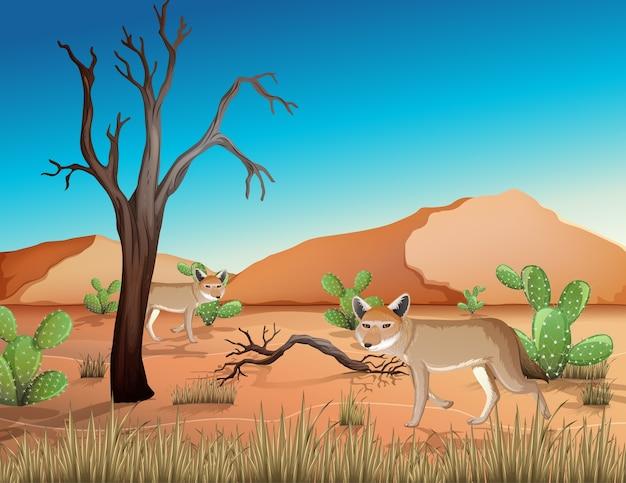 낮 시간 현장에서 모래 산과 코요테 풍경과 사막