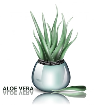 Detailed aloe vera plant