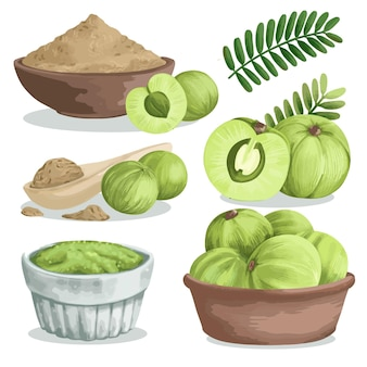 Detailed amla fruit elements set